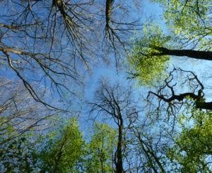 Sylvothérapie : Sortie sylvatique poétique