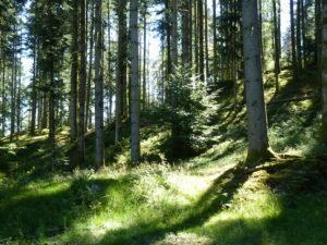 Sylvothérapie : Dans l'atmosphère des forêts vosgiennes !