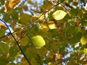 Sylvothérapie : En automne, vivez la forêt !